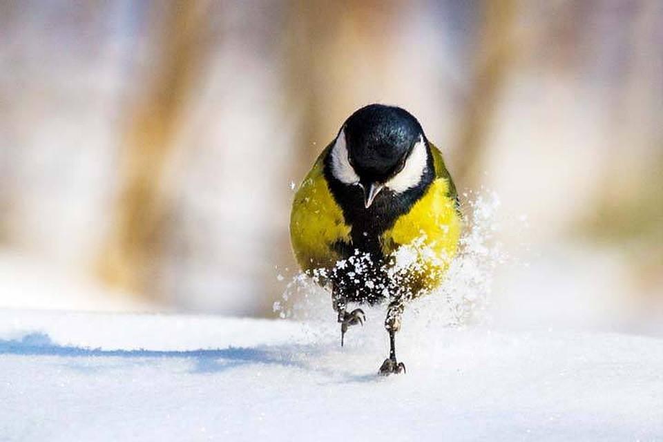 Смольный просит городских жителей посодействовать сперелетными птицами