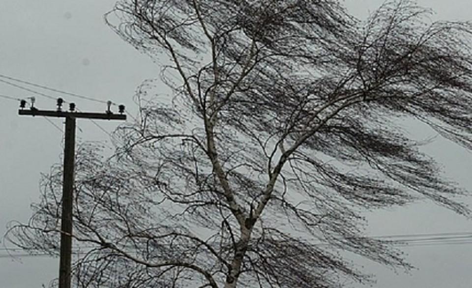 Днем 21апреля вСмоленской области прогнозируют дожди