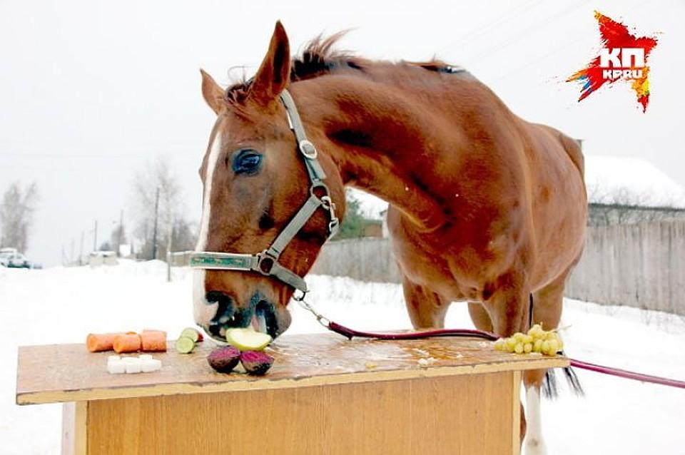 ВЛенобласти мошенница увела лошадь стоимостью 450 тыс. руб.