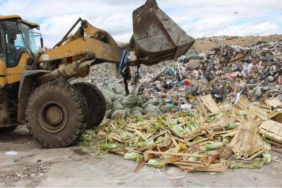 ВПетербурге под колесами трактора уничтожили 6 тонн санкционных фруктов иовощей