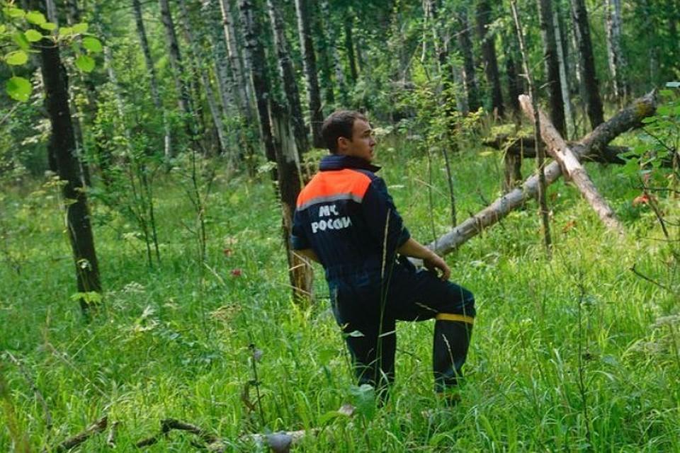 НаУрале заблудившегося ребенка, которого искали 5 дней влесу, отыскали живым