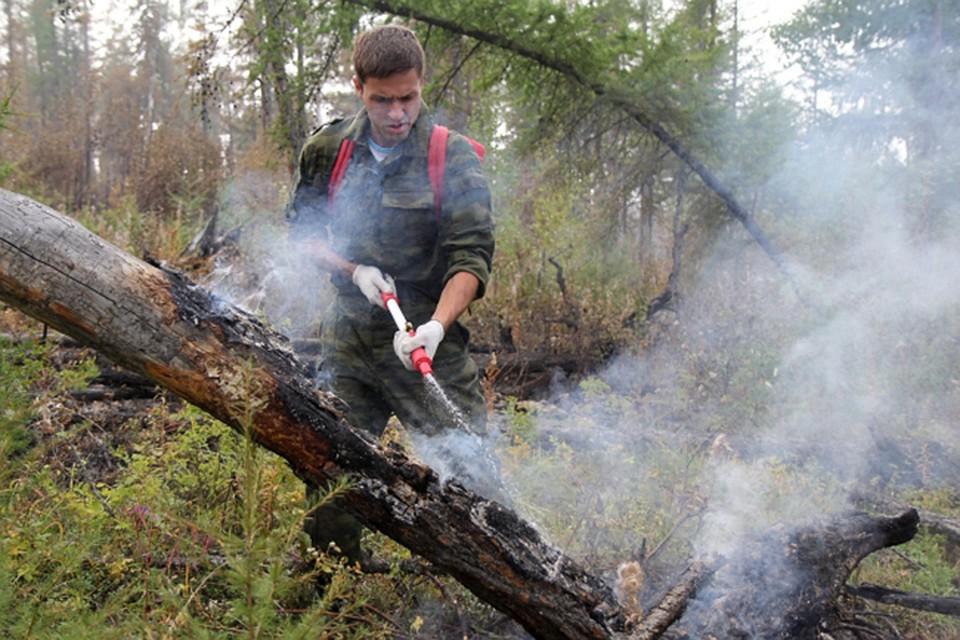 Надалеком Востоке 62 пожара охватили 6,8 тыс. гектаров леса