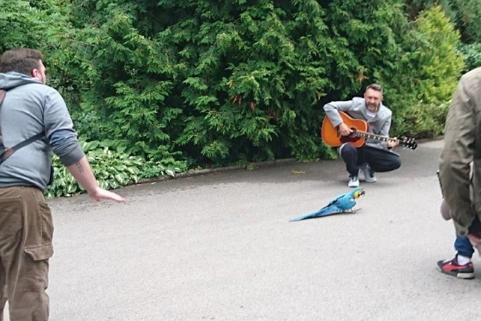 Шнуров сыграл любимую песню попугая вкалининградском зоопарке
