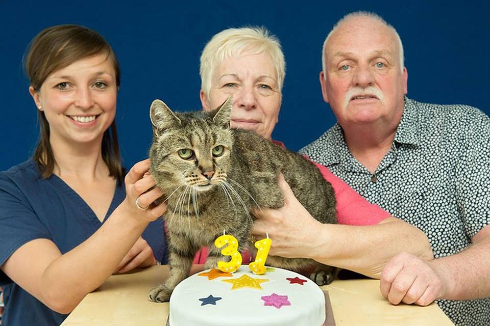 На33-м году жизни наБританских островах скончался самый старый вмире кот