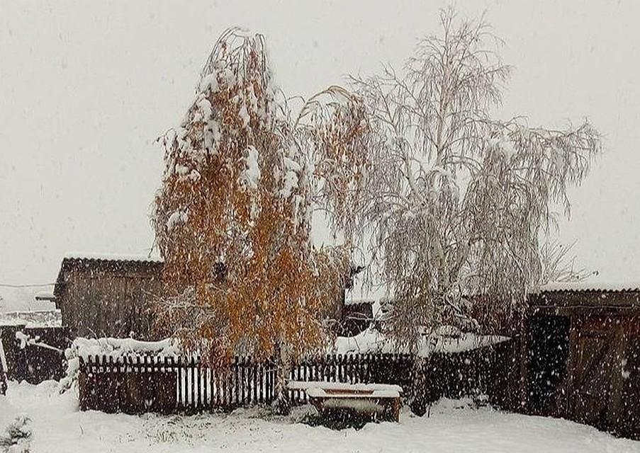 Граждане  Кузбасса опубликовали вглобальной сети  уникальные фотографии первого снега