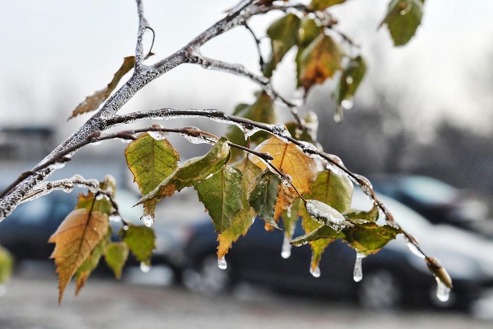 Прохладная идождливая погода придёт вНовосибирск навыходных