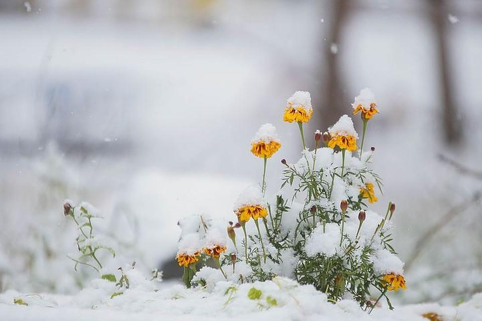 Волгоградскую область всередине недели ожидают заморозки до-3°С