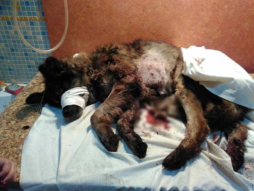 ВКузбассе мужчина наулице расстрелял собаку