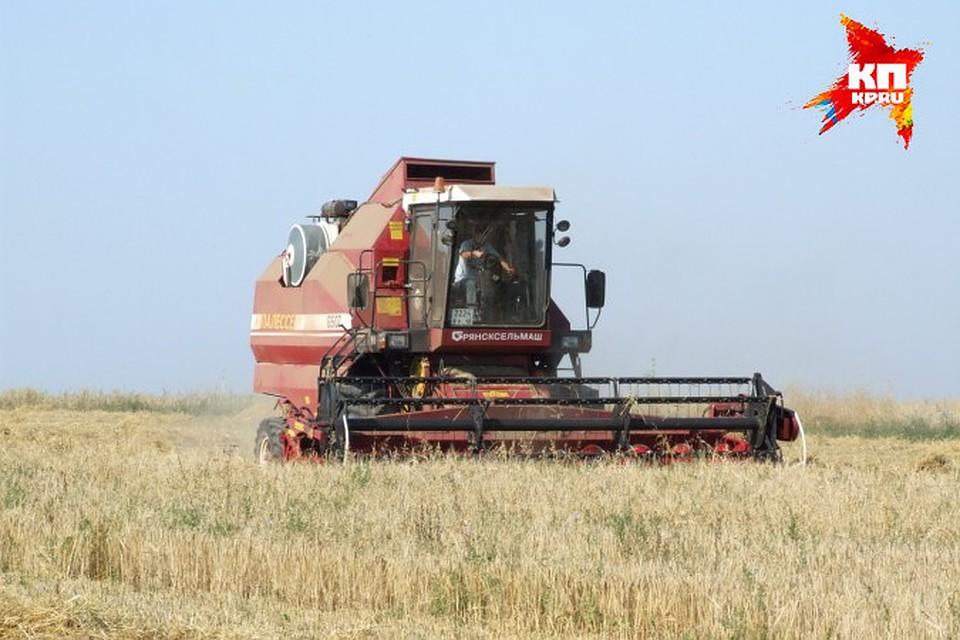 Татарстанские аграрии идут нарекордный урожай сладкой  свеклы