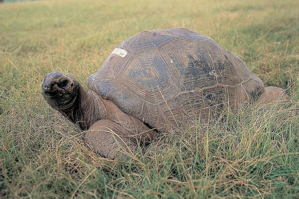 Выяснилось, что старейшая вмире черепаха нестандартной ориентации