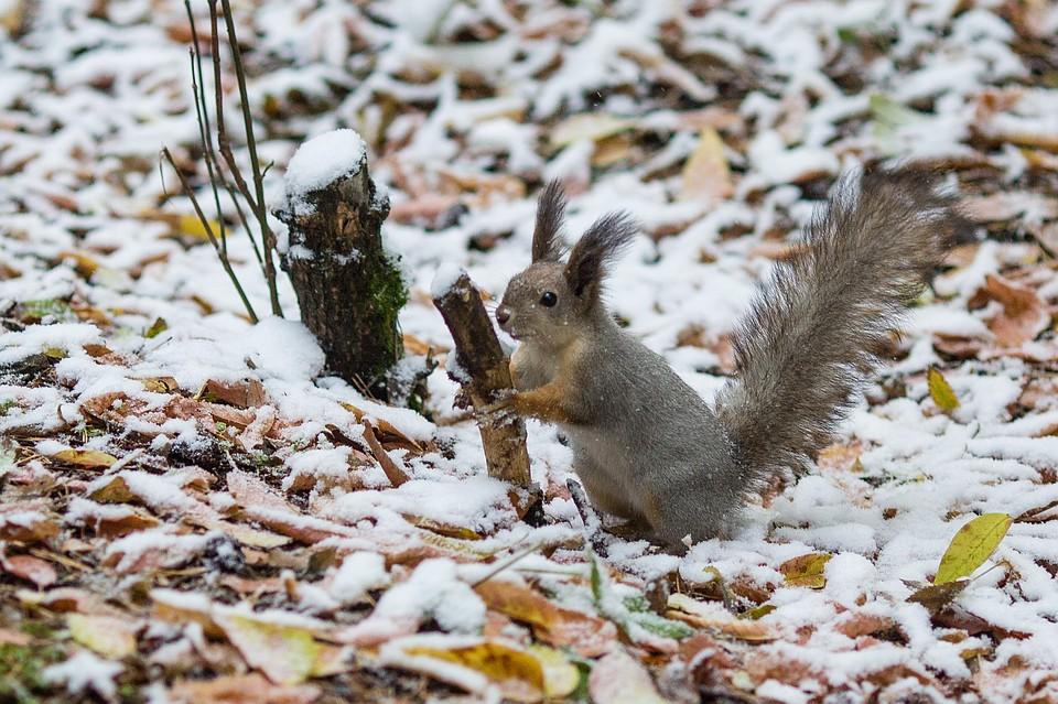 ВСамарской области выпал 1-ый снег