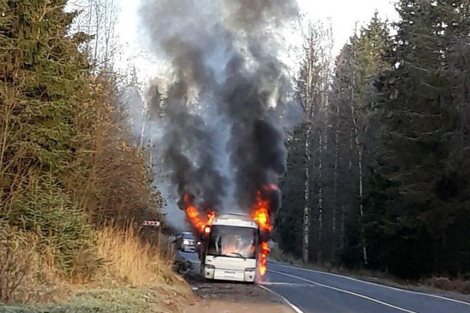Свидетели: Натрассе Светогорск— Петербург сгорел рейсовый автобус