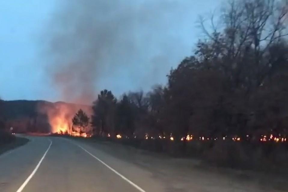 ВПриамурье назвали предварительную причину пожара вХинганском заповеднике