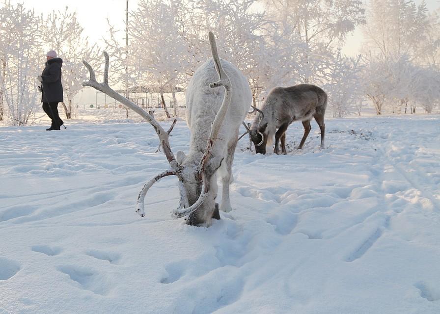Граждане Казахстана пытались незаконно ввезти наЮжный Урал 5 тонн оленьих рогов