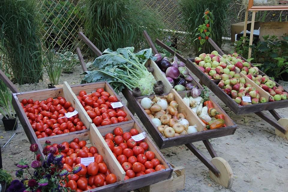 ВВоронеже подорожали консервы ирыба, однако упали вцене овощи ифрукты