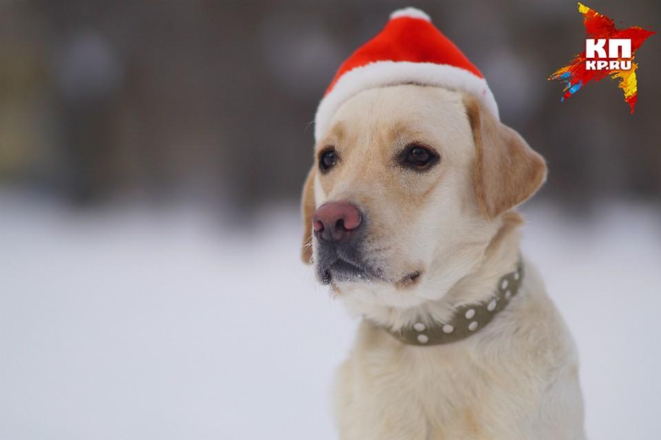 Накануне года Собаки вОмске выявят носителей «собачьих» фамилий