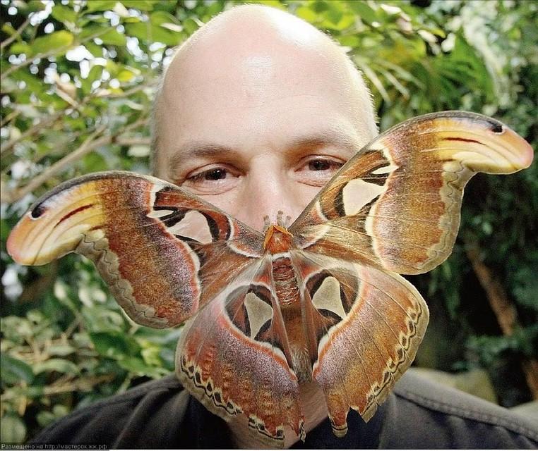 ВРостове насвет возникла самая крупная вАзии бабочка