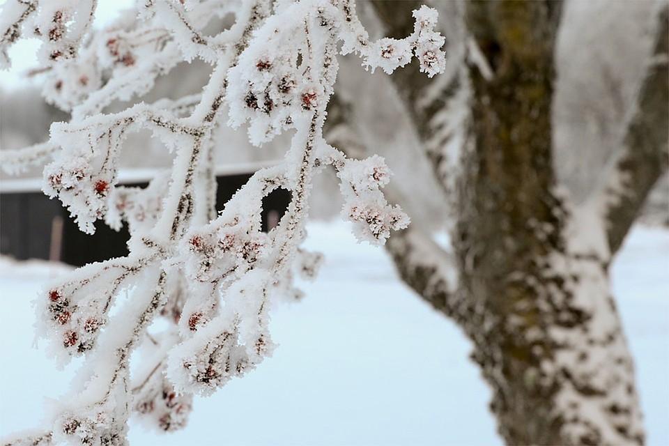 В Липецке сохранится небольшой мороз