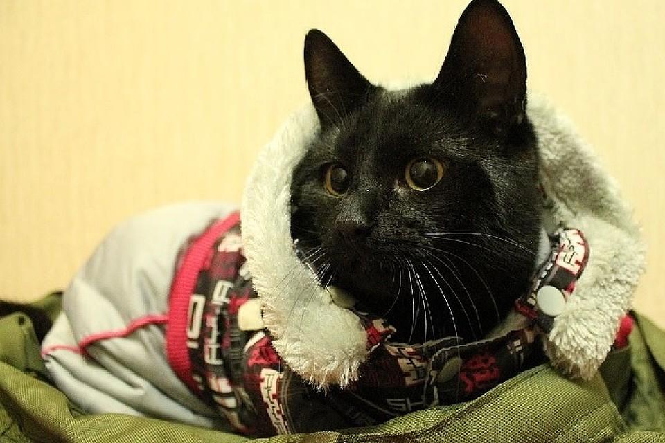 Путешественник изМурманска иего кот добрались доВладивостока за57 дней