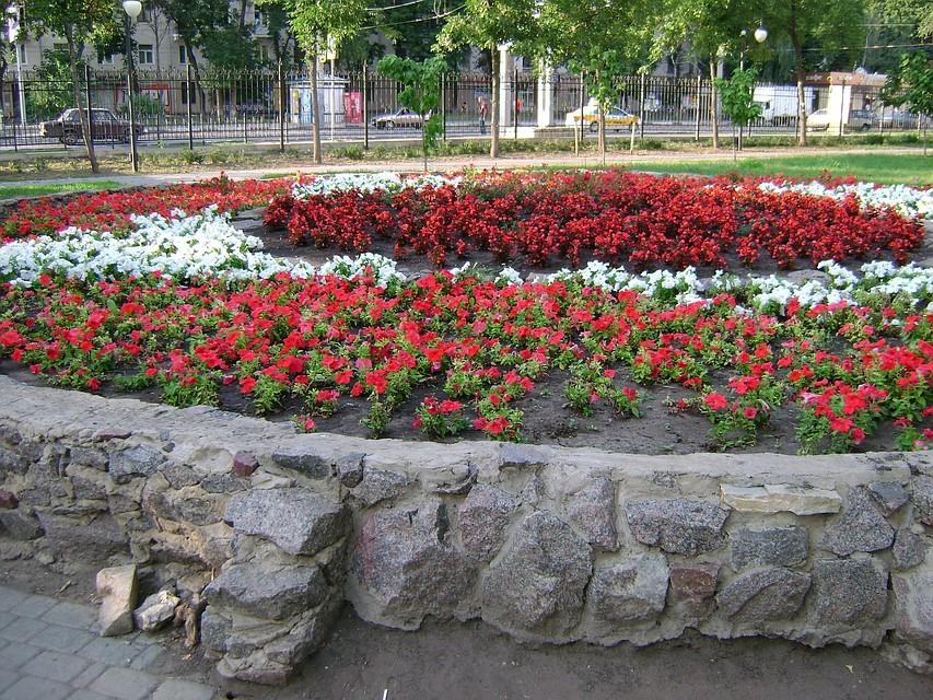 ВВоронеже ищут подрядчика для высадки цветов вклумбах города