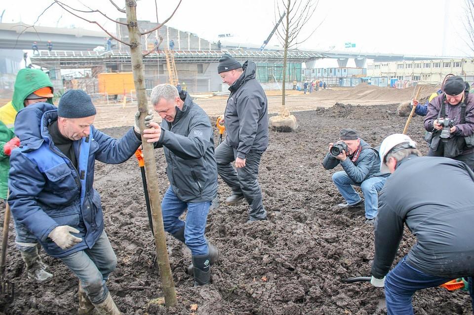 Вице-губернатор Петербурга высадил деревья устанции метро «Новокрестовская»