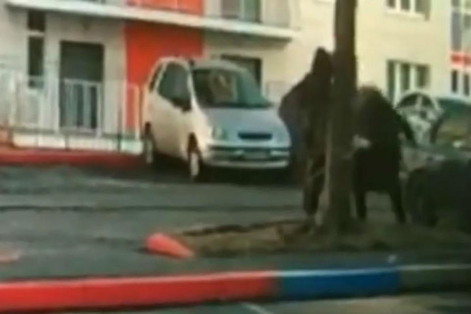 ВКрасноярске мужчина чуть неубил пса обасфальт