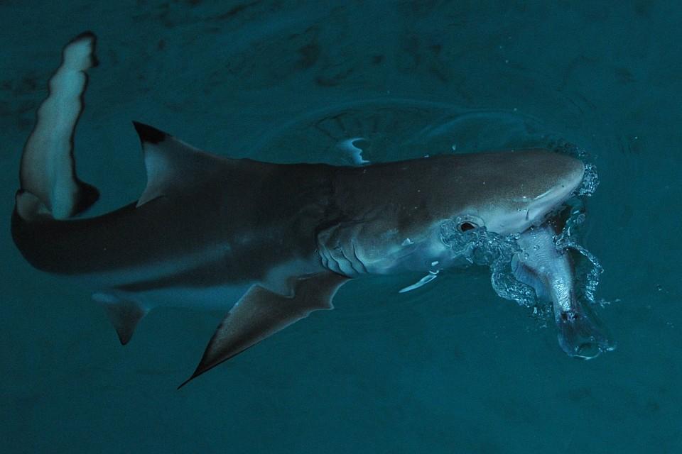 Вамериканском штате Массачусетс впервый раз  за80 лет акула убила человека