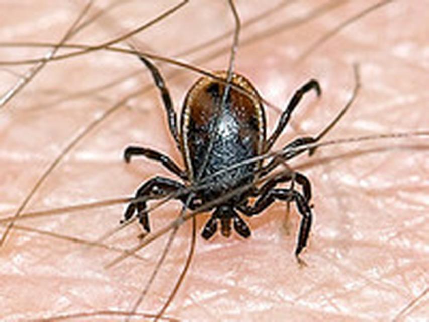 к паразитам человека вызывающим опасные заболевания относятся