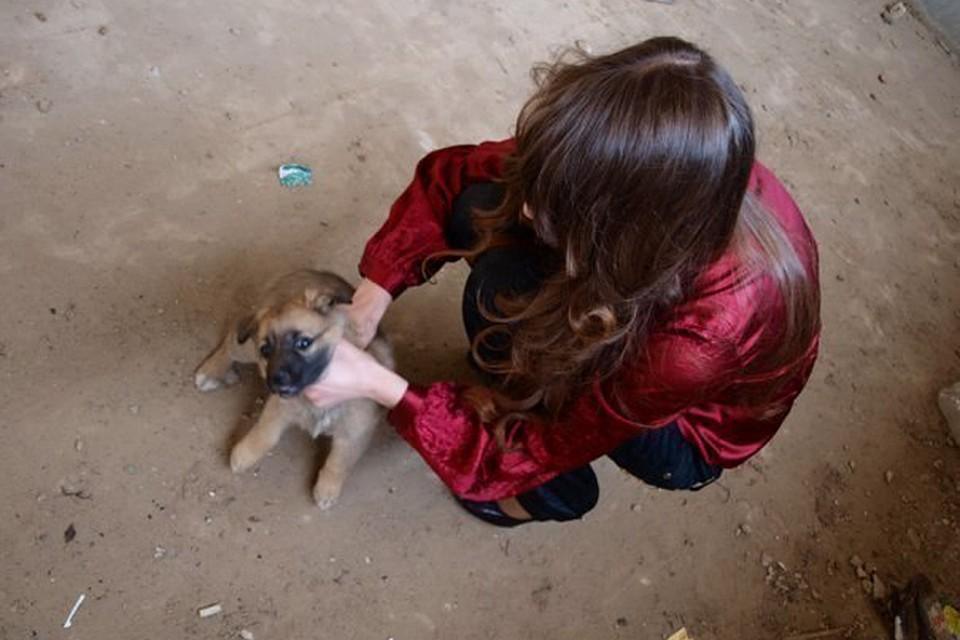 Живодерка замучила щенка ради фотоссессии
