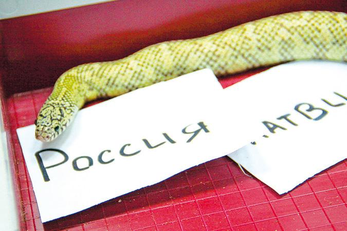 Уфимский последователь «осьминога Пауля» месяц назад предсказал победу американским хоккеистам
