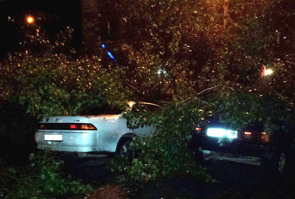 Дерево рухнуло надве припаркованные легковушки вРостове