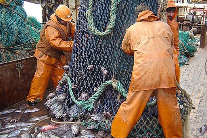 Норвегия и Россия обменялись мнениями о возможных общих допустимых уловах трески, пикши, мойвы, сайды в Баренцевом и Норвежском морях. Фото: с сайта murmansk.fishretail.ru