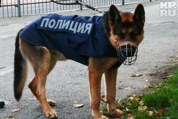Кинологи с собаками проверяют забытый пакет