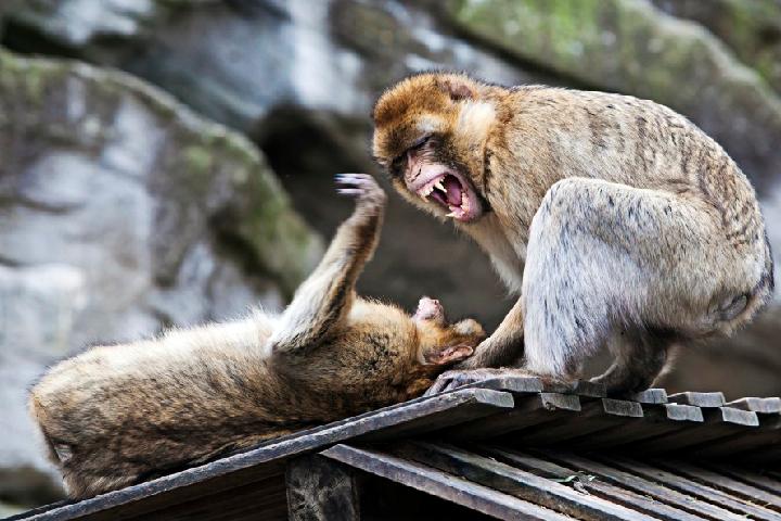 Большинство млекопитающих склонны к насилию и смертоубийствам.