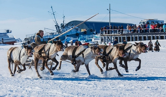Финская компания рассматривает возможность закупки наЯмале оленьих шкур