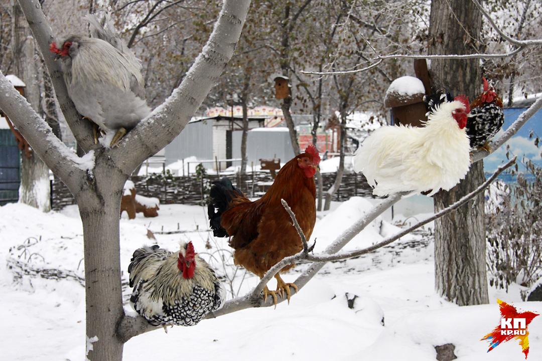 32 символа Нового года поселились в Барнаульском зоопарке