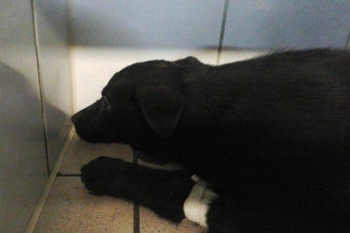Пермский зоозащитник заявляет, что вЗакамске бульдозер переехал щенков