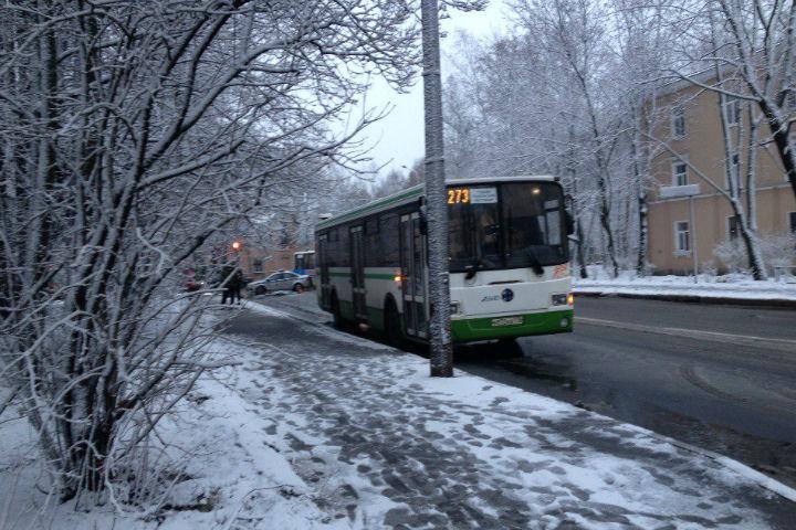 ВПушкине автобус насмерть сбил напереходе неизвестную женщину
