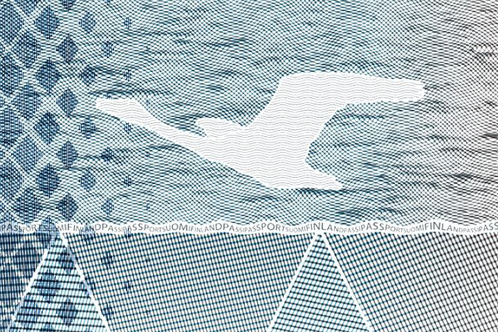 В новом финском паспорте появятся летящие лебеди. Фото: с сайта giphy.com