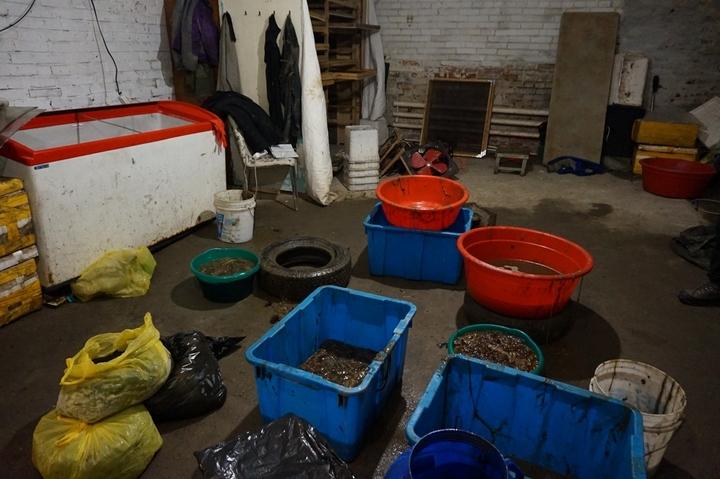 Двое жителей Китайская народная республика организовали вПриморье очередной нелегальный цех попереработке трепанга