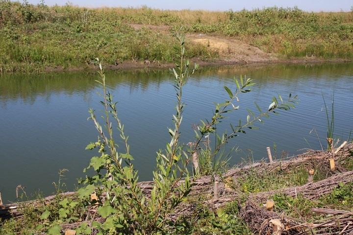 ВВолгоградской области задва года обещают расчистить два ерика иозеро