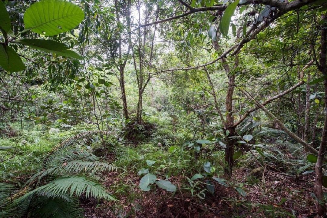 Новая фотозагадка: англичане ищут гвардейцев в тропических зарослях