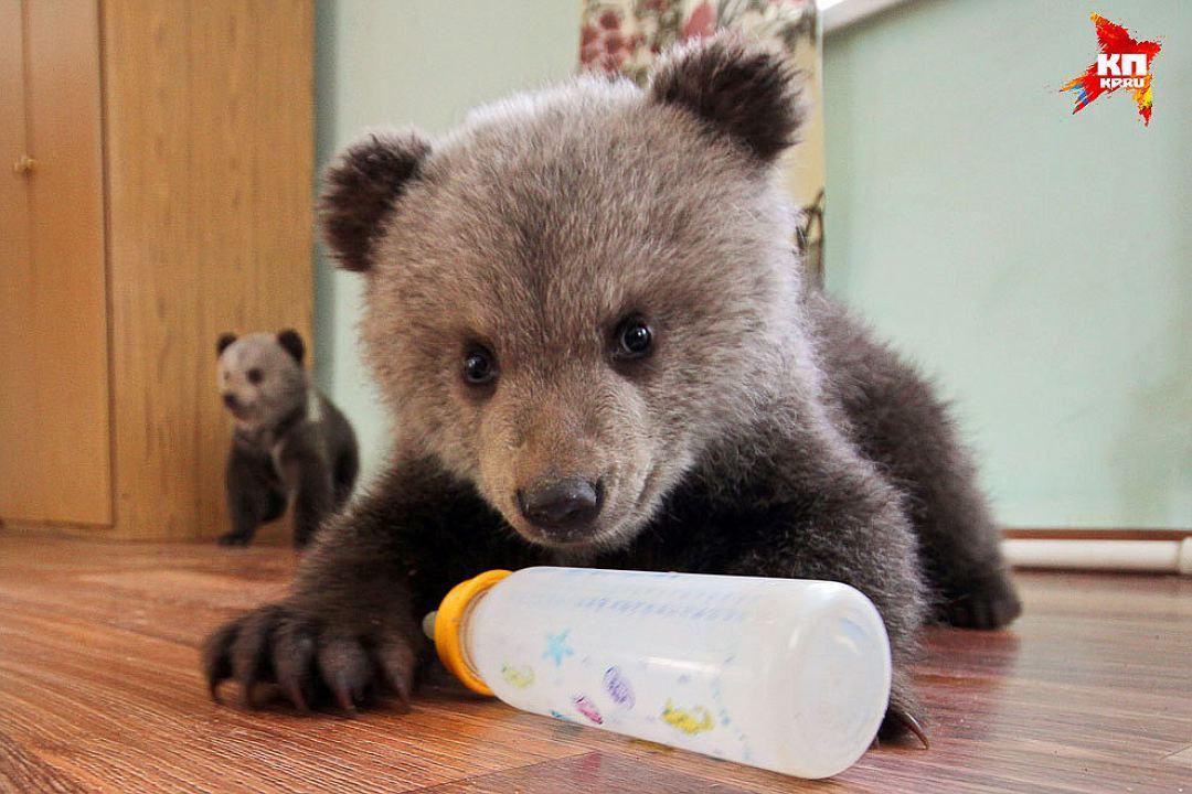 Взоопарке Лабинска празднуют день рождения медвежонка
