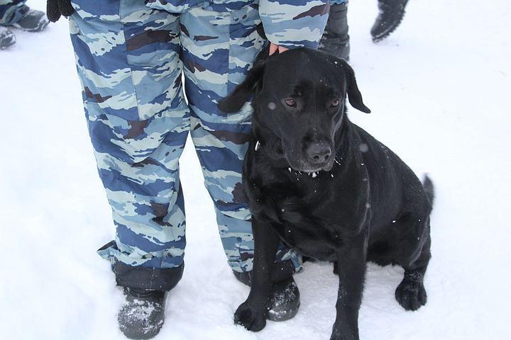 Около АЗС наПулковском отыскали снаряд времён ВОВ