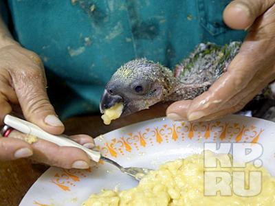 Бразильские полицейские выкармливают птенцов, конфискованных у контрбандистов