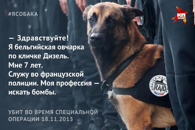 Добрыня заменит на службе в полиции погибшего пса Дизеля Фото: Наиль ВАЛИУЛИН