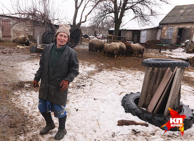 Во дворе Наташи Крайней весь двор забит скотиной - той, что осталась. Фото: Александр КОЦ, Дмитрий СТЕШИН