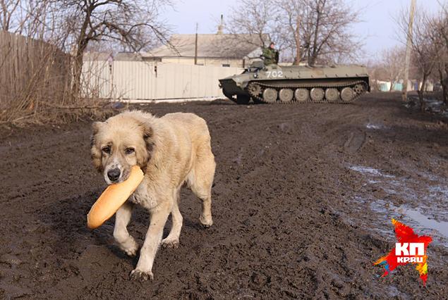 Страдают от войны не только люди Фото: Александр КОЦ, Дмитрий СТЕШИН