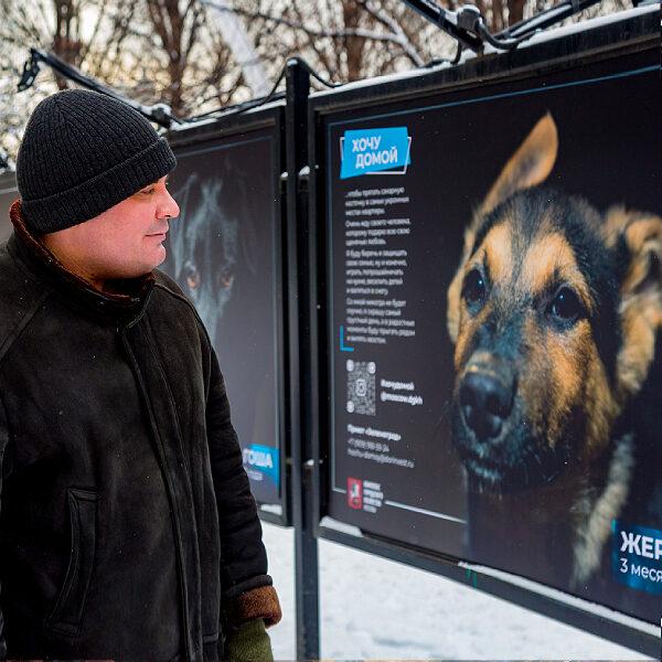 Фотовыставка животных из приютов «Хочу домой!»