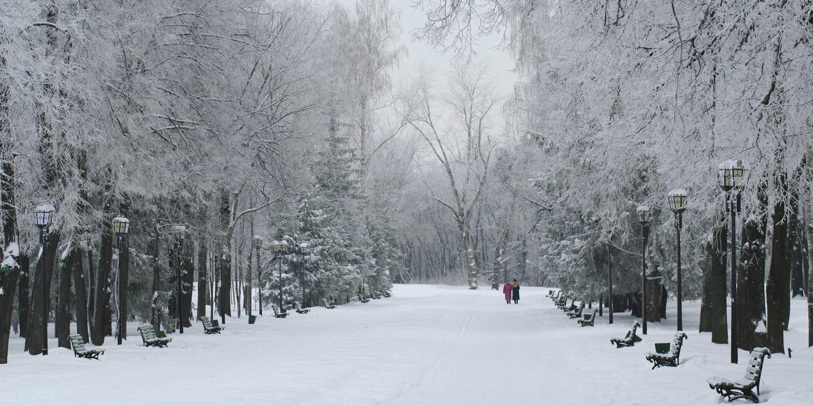 Зимой заснеженный парк имени Горького особенно красивФото: Эльвира Максимова, lori.ru